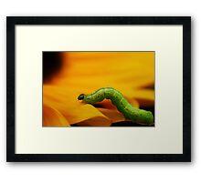 a bugs life Framed Print