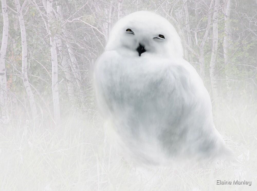 Snowy Owlet by Elaine  Manley