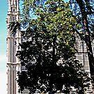Duomo Tree-Orvieto, Italy by Deborah Downes