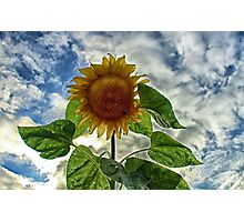 Surreal Bloom Photographic Print