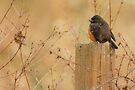 BIRD ON A POST by Sandy Stewart
