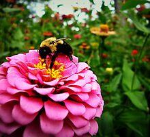 Pink Nectar  by Susan S. Kline