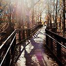 Fall Best Light by Tracey Hampton