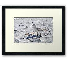 "Floridian Seagull ""Fort Myers Beach, Florida"" Framed Print"
