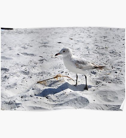 "Floridian Seagull ""Fort Myers Beach, Florida"" Poster"