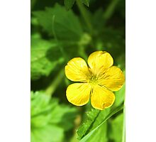 Build Me Up, Buttercup Photographic Print