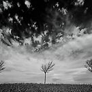 Tree Horizon by geoff curtis