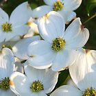 White Dogwood Raw by Terri Chandler
