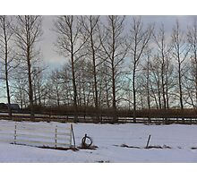 Alberta windbreak in winter. Early morning colors. Almost Spring in Alberta Photographic Print