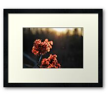 catching sunset  Framed Print