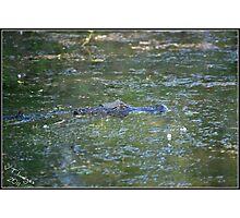 Lurking Gator Photographic Print