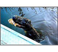 Feeding Gator Photographic Print