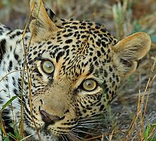 Beautiful eyes! by jozi1