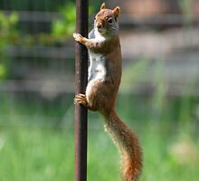 Red Headed Pole Dancer by RoyceRocks