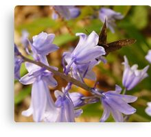 Blue Bells and Butterfly Canvas Print