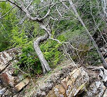Tree  by KristaLightning