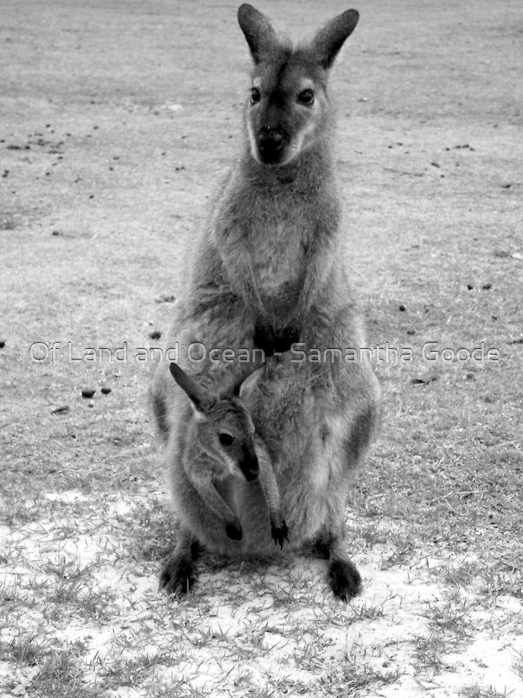 Wild Wallaby & her Joey by Of Land & Ocean - Samantha Goode