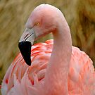Flamingo 1 by Nick Boren