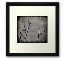 Black Birds Framed Print