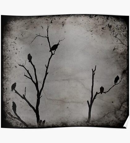 Black Birds Poster
