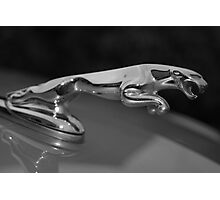 jaguar black&white Photographic Print