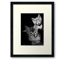 Whiskers on Kittens Framed Print