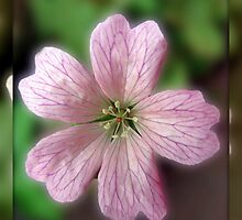 Five Pink Petals - Tiny Flower in Mirrored Frame by BlueMoonRose