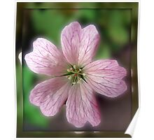 Five Pink Petals - Tiny Flower in Mirrored Frame Poster
