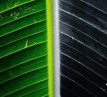 Leafy Abstract by SCDigitalPhoto