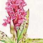 Hebrideaui orchid: Dactylorhza majalis by Sarah Trett