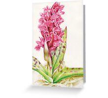 Hebrideaui orchid: Dactylorhza majalis Greeting Card