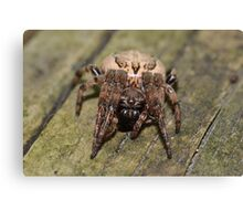 Impressive Looking Orb Weaver. Canvas Print