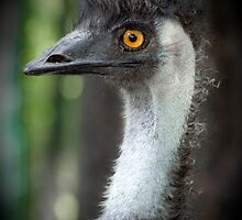 Old Man Emu Part 2 by emiphotography