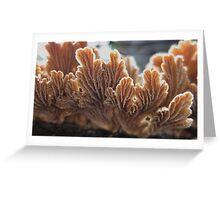 fungus dreaming Greeting Card