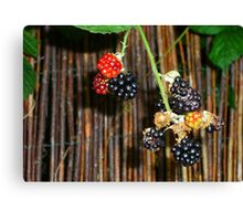the pick of the harvest Canvas Print