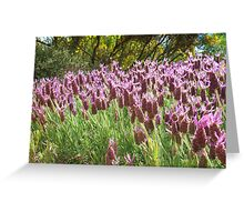 Lavender in Light Greeting Card
