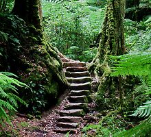 Rainforest Steps by Michael Vickery