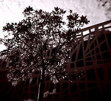 Nature Vs Architecture by Steve Tognazzini
