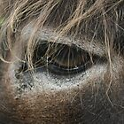 Donkey Eye by Alfredo Encallado