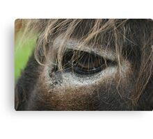 Donkey Eye Canvas Print