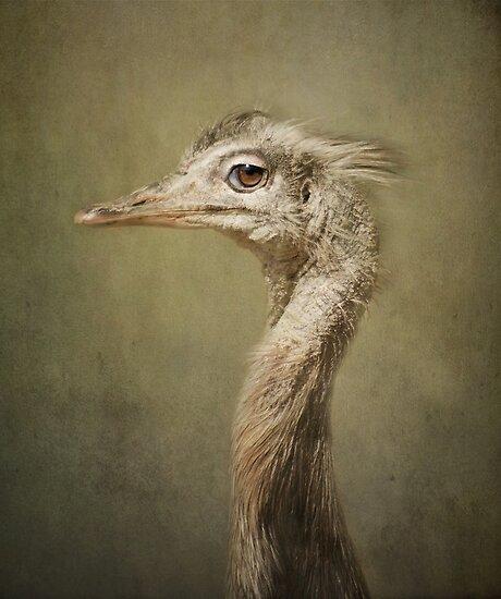 Portrait of a Rhea.. by polly470