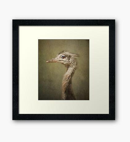 Portrait of a Rhea.. Framed Print