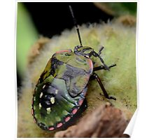 Shield bug-Do I look like a tortoise? -Melbourne Poster