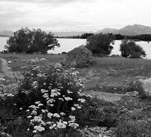 Foreshore Lake Tekapo by coffeebean
