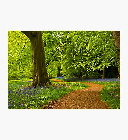 Woodland Path Photographic Print