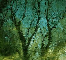 Summer Tree reflection by richard  webb