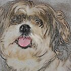 Devotion - Shih Tzu by Ginger  Barritt