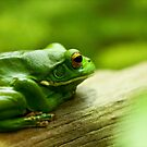 Thinking About What Frogs Think About by Josie Eldred