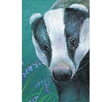 Badger in the bluebell woods Photographic Print