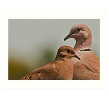 Mourning Dove & Ring Necked Dove Art Print